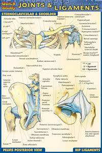 Joints  U0026 Ligaments - Pocket Guide