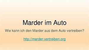 Marder Im Auto : marder im auto ~ Yasmunasinghe.com Haus und Dekorationen