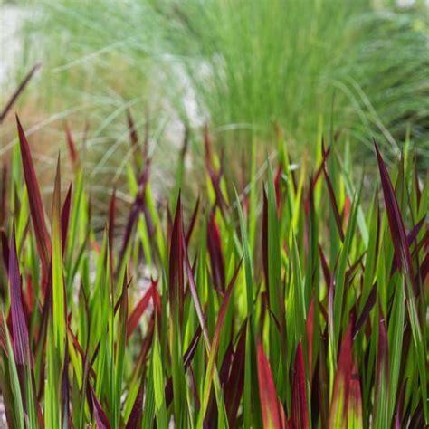 Hochwachsende Pflanzen Sichtschutz by Sichtschutz Gr 228 Ser Als Sichtschutz Conexionlasallista
