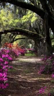 Magnolia Plantation and Gardens Charleston South Carolina
