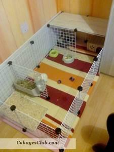 Cage A Cochon D Inde : cavy cage cochon d 39 inde ~ Dallasstarsshop.com Idées de Décoration