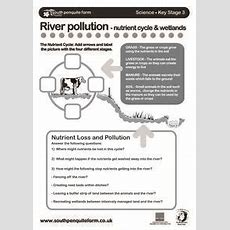 River Pollution  Nutrient Cycle & Wetlands Worksheet For 6th  7th Grade  Lesson Planet