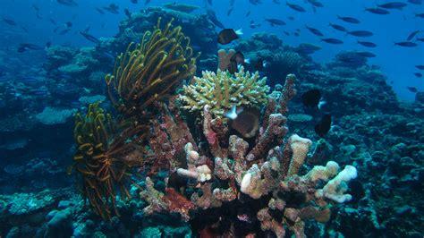 couples guide   fiji islands
