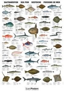 custom yearbook saltwater fish chart poster with sea fish worldwide
