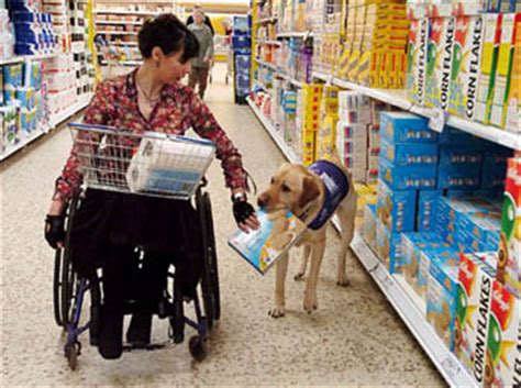 how do animals help humans all about assistance dogs