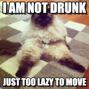 I Am Not Drunk Cat Meme - Cat Planet | Cat Planet