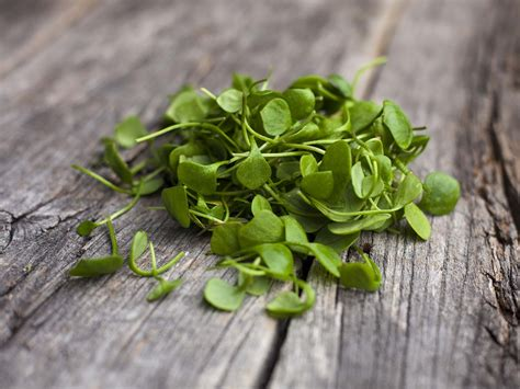 watercress vegetables