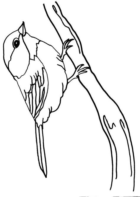 disegni da colorare uccelli disegno cinghiale da colorare disegno uccello da colorare
