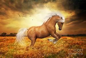 Palomino Horse Sundance Painting by Shanina Conway