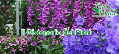 nomi di fiori come si chiama diamo un nome a fiori e piante fiori e