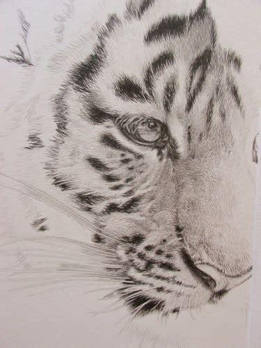 wildartcapture julia ruffles  tiger cub drawing