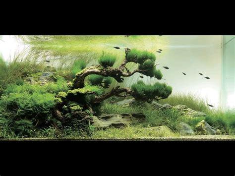 japanese aquascape japanese garden inspired aquarium by takashi amano