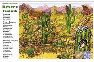 Desert Food Web Activity
