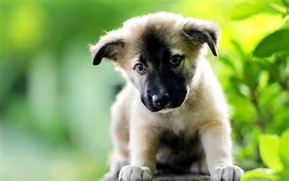 Adorable Puppy Desktop Sad Face Pixelstalk