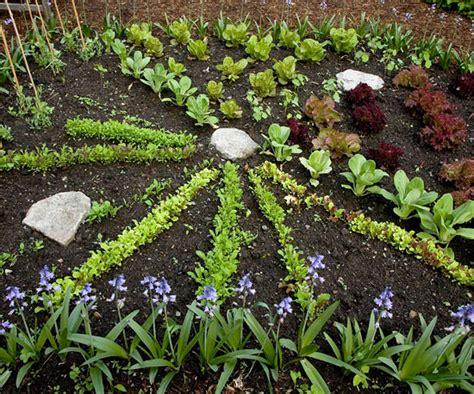 fall vegetable garden planting fall vegetables