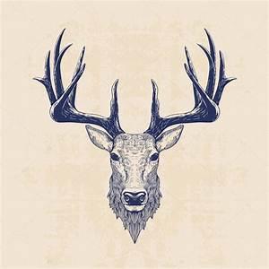deer head — Stock Vector © blauananas #78475128
