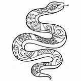 Snake Coloring Colouring Afbeeldingen sketch template