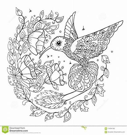 Coloring Hummingbird Birds Graphic Tropical Adults Illustration