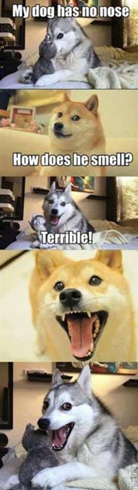 nose pun dog   meme