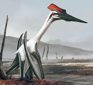 Quetzalcoatlus (wings =18m) | My Dinosaurs and Fossils ...  Quetzalcoatlus