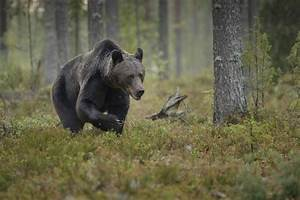 Plants & Animals in the Taiga Biome (with Pictures) | eHow