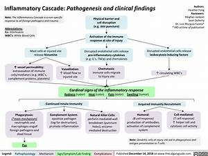 Inflammatory Cascade  Pathogenesis And Clinical Findings