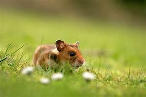 On Detecting Stress Endocrines In Hamster Poop