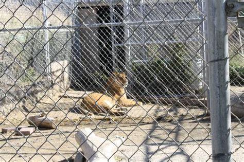 sad animals  zoo cages