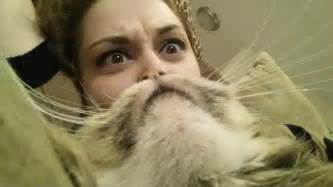 cat beard cat beard really pictures collection on picshag