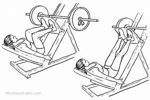 Leg Press / Machine Squat Press | WorkoutLabs