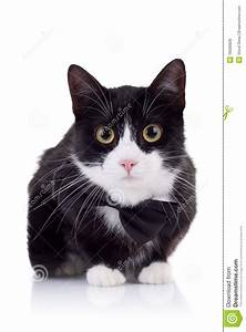 Cute Black And White Cat Royalty Free Stock Photos Image ...
