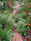 Beautiful flowering path in country cottage style flowers for cottage style gardens