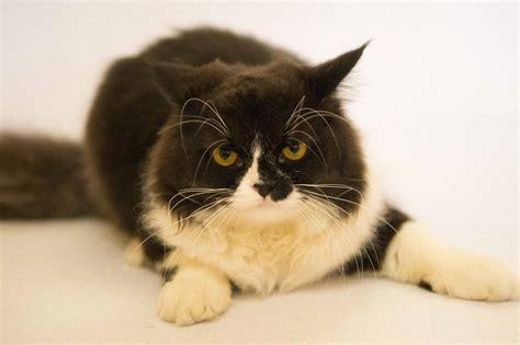 Blood In Cats Stool Homevet