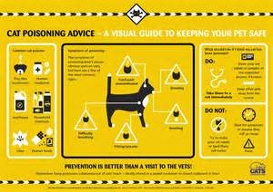 how to recognise the symptoms of poisoning in your cat