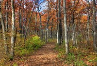 Image result for Royalty Free Picture of A Path In The Woods