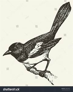 """Vector Drawing Of A Series Of Monochrome Sketches """"Birds ..."""