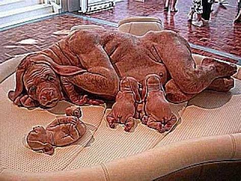ugliest creature  mutated dog youtube