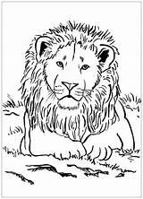 Lion Coloring Pages Simple Children Animal Printable Animals Justcolor sketch template