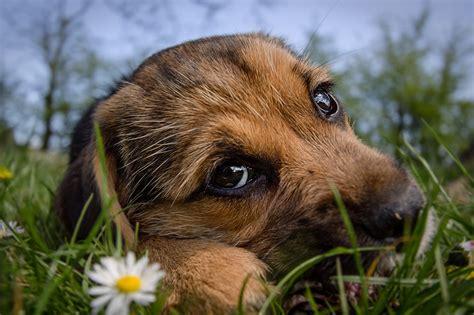 Dann finden sie hier einige wichtige informationen zum thema hundesteuer in süßen. Foto Welpe hund Süß Gras Schnauze Blick hautnah ein Tier