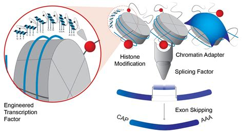 Modification Histone by Histone Modification At Of Epigenetic