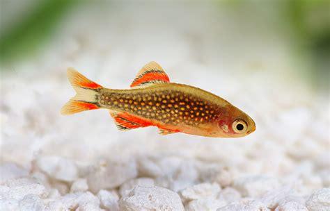 fische kleines aquarium fische im nano aquarium kleinesaquarium de