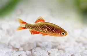 Transportbox Für Fische : fische im nano aquarium ~ Michelbontemps.com Haus und Dekorationen