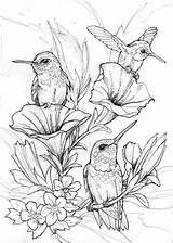 Hummingbird Coloring Bird Drawings sketch template