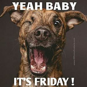 YEAH BABY ... IT'S FRIDAY ! | For a Giggle | Pinterest ...