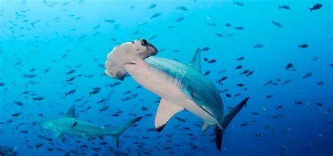 Galapagos Diving Tours   Galapagos Diving Day Tours