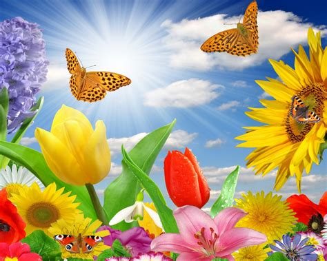 summer spring butterfly flowers sunlight rays color