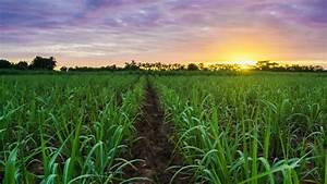 Hurricane Irma flattens Cuban sugarcane :: IEG Vu