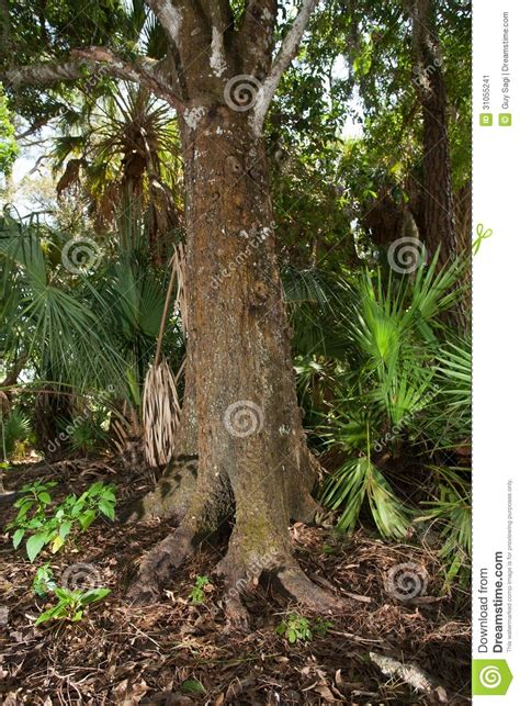odd tree stock image image