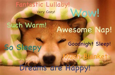 Know Your Meme Doge - sleepy doge doge know your meme