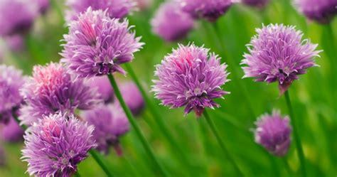 les principales fleurs comestibles 1 2